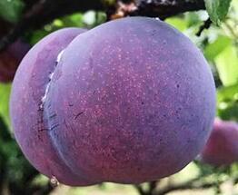 应季水果货源产地直发 零代理费 全国水果一件代发