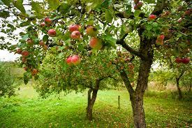 微商水果产地直发 现摘现卖一手货源 对接档口