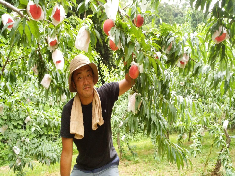 做微商卖水果,从哪里找水果货源?