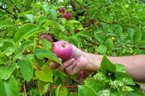 农副产品水果产地批发,招收网店、微信代理,一件代发